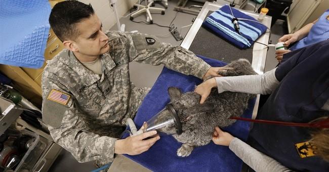 Fort Campbell veterinarians honing skills at Nashville Zoo
