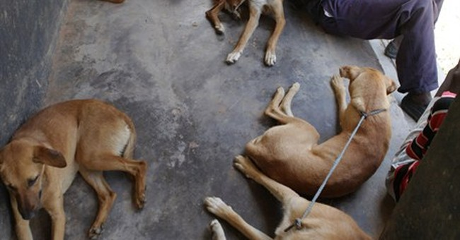 Zimbabwe covets canines as dog breeding becomes big business