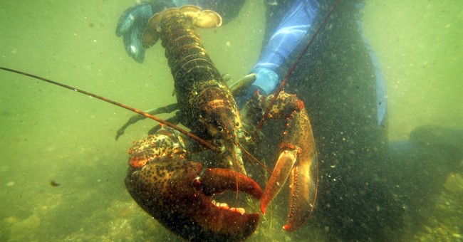 American lobster: The new Chinese New Year delicacy