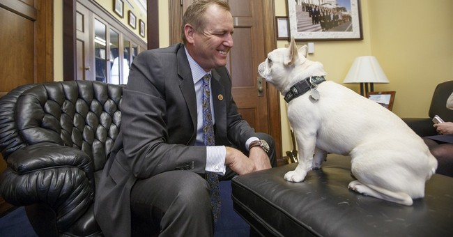 Lawmakers want Amtrak to allow small pets on trains