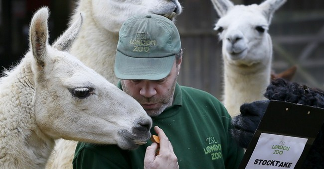 Critter count: London Zoo begins annual animal census