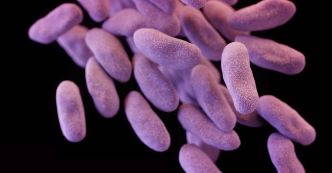 UCLA says more than 100 may have encountered 'superbug'