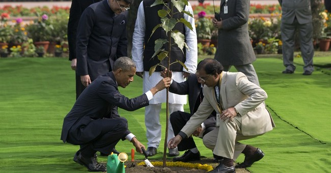 India insists: Obama's tree is not dead