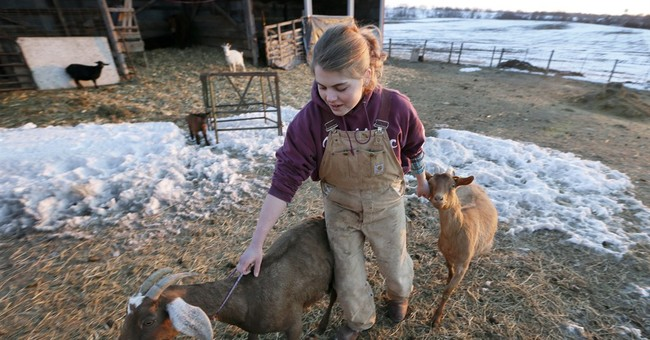 Goat farmers, producers handle increased demand for dairy