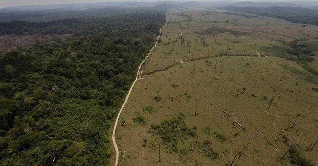 Brazil detains alleged deforestation king of Amazon