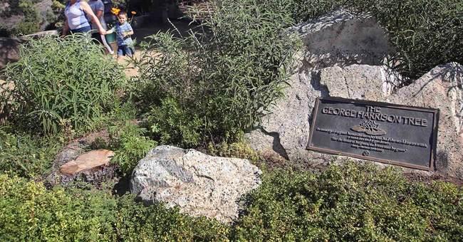Tree planted in LA park in memory of George Harrison