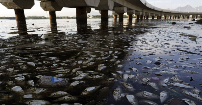 Rio officials probe source of fish die-off in Olympic waters