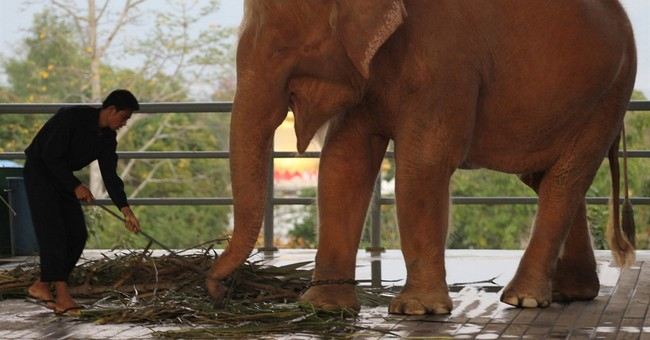 Myanmar captures rare white elephant in western jungles