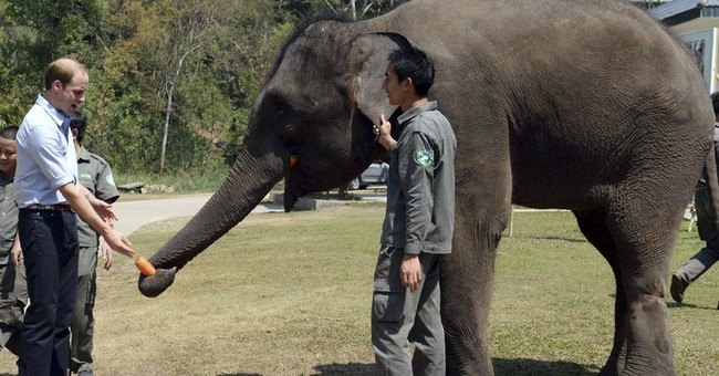 Prince William meets elephant on final day of China tour