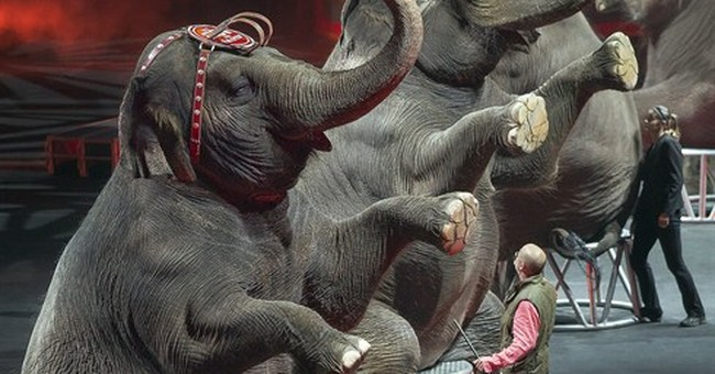 Why is Ringling removing elephants from the circus?