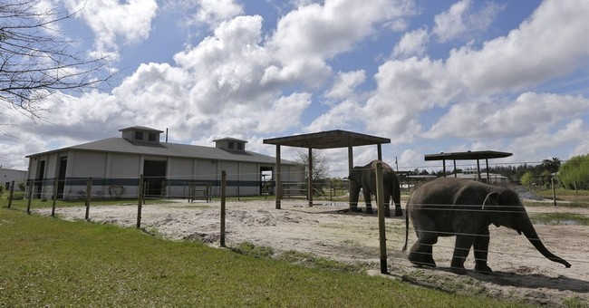 Ringling Bros. to give up elephant acts in 3 years