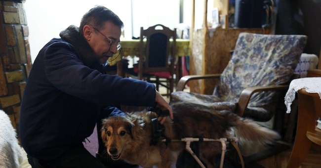 Home-made wheelchair helps injured pets in Balkans