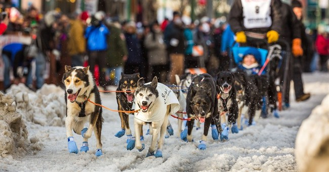 Iditarod show goes on despite lack of snow