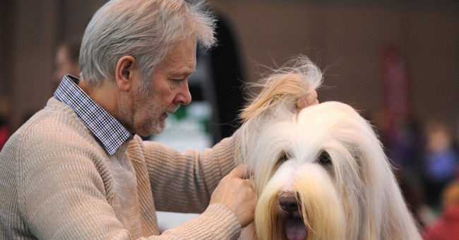 5 things to know about Crufts dog show