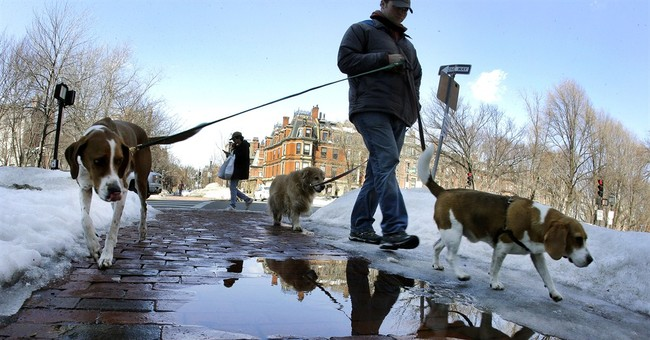 Milder weather brings relief to winter weary New Englanders