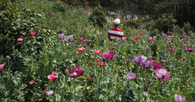 Mexican town where 43 students disappeared is opium hotbed