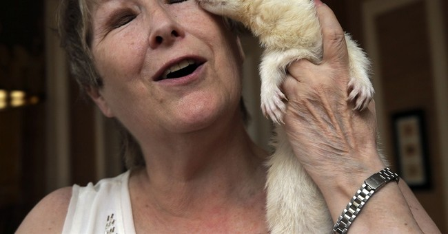 NYC ban on keeping ferrets as pets stays, health board rules