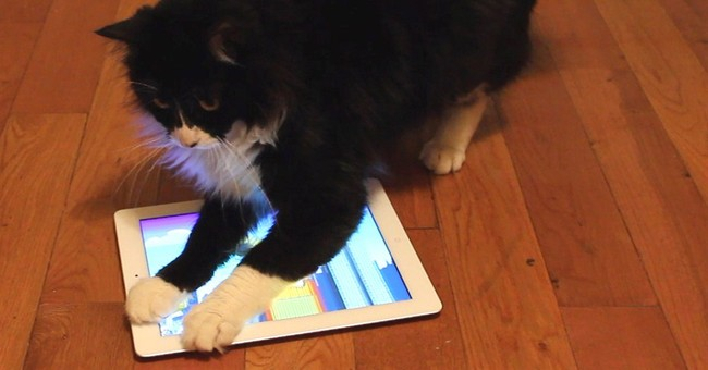 Tablet apps let cats catch critters in cyberspace