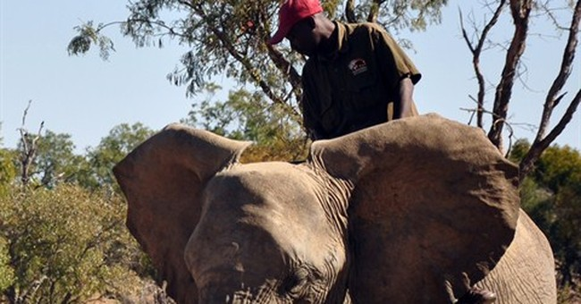 Bomb-sniffing elephants? Not so nutty, US Army says
