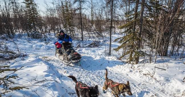 Musher disqualified from Alaska Iditarod race for iPod