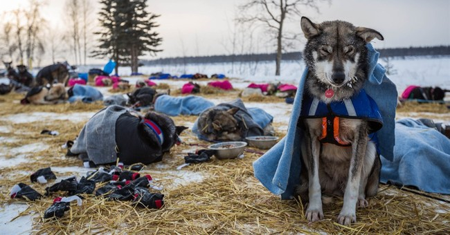 Mitch Seavey is first Iditarod musher to reach Ruby