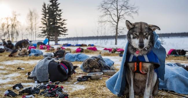 Mitch Seavey is first Iditarod musher to reach Ruby