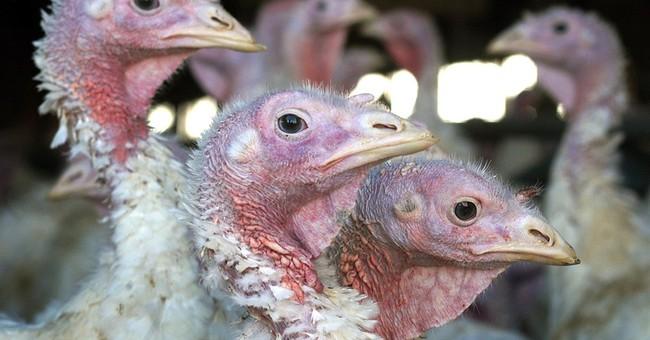 New bird flu strain has poultry farmers scrambling