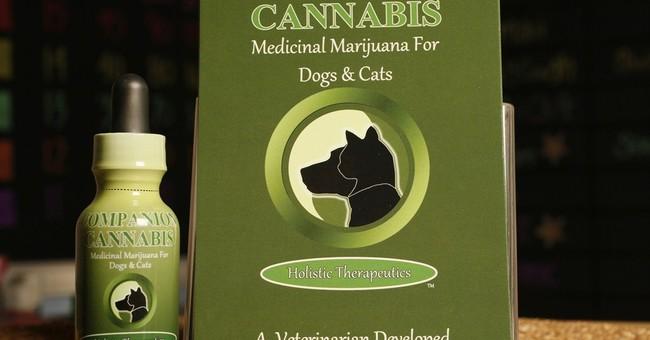Nevada bill would allow sick pets to use medical marijuana