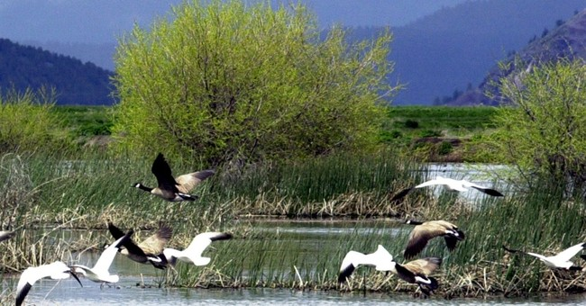 2,000 snow geese die from illness in Idaho wildlife areas