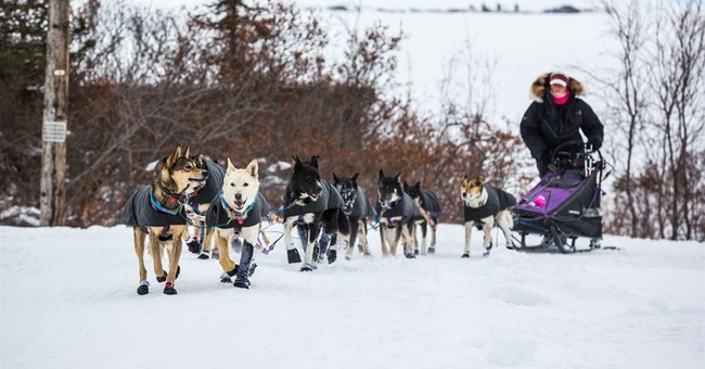 Nome, Alaska, cheers for native son in Iditarod