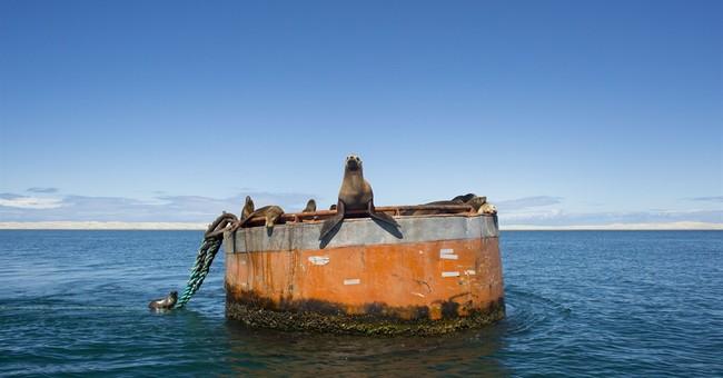 AP PHOTOS: Baja peninsula features whales, exotic preserves