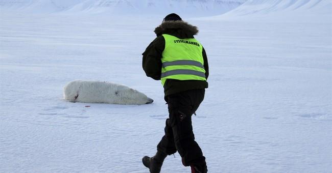 Polar bear attacks tent in Norway's Arctic, injures tourist