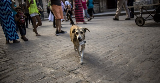 Street dogs find homes in venerable Cuban institutions