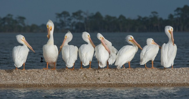 Group completes 900-mile trek through Florida for wildlife