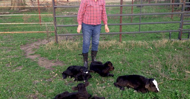 Cow in Northeast Texas defies odds, gives birth to 4 calves