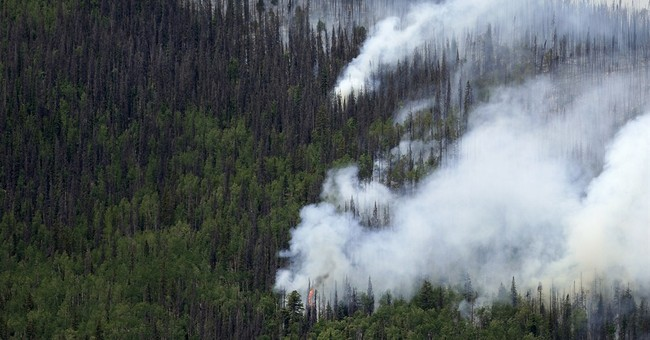 Report says beetles don't make forests more likely to burn