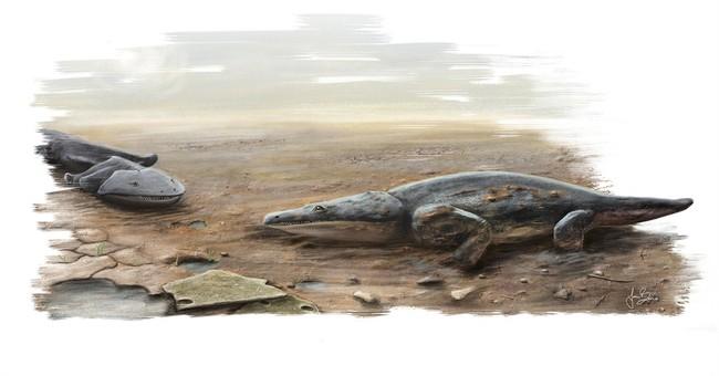 Researchers find fossil of 'Super Salamander' species