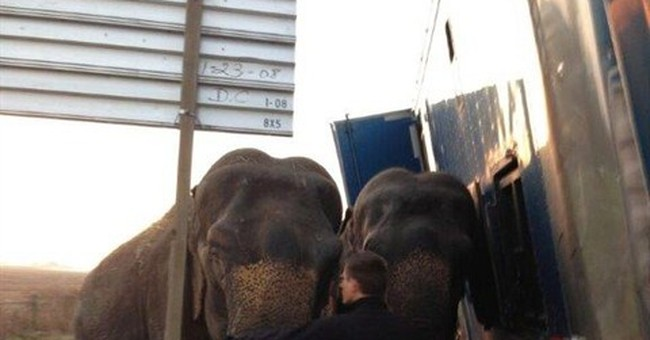 Elephant hauler gets stuck; pachyderms keep truck upright