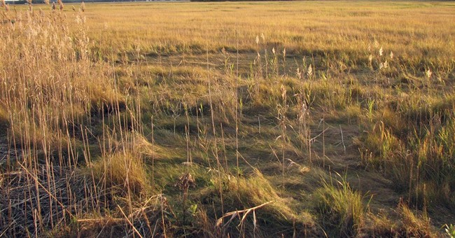 Report: Diversity of New England plant life is threatened
