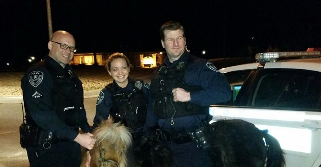 Alaska police officers corral grazing miniature horses