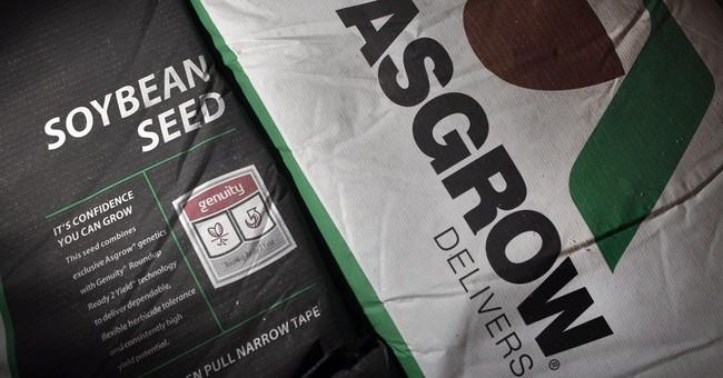 Falling corn prices stalk Monsanto, sending 2Q profits lower