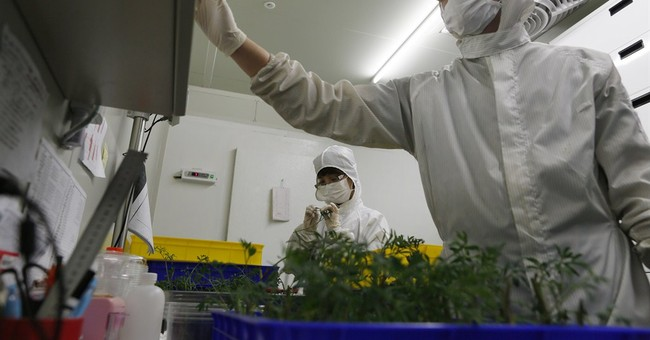 Taiwan expanding into indoor LED-lit, pesticide-free farms