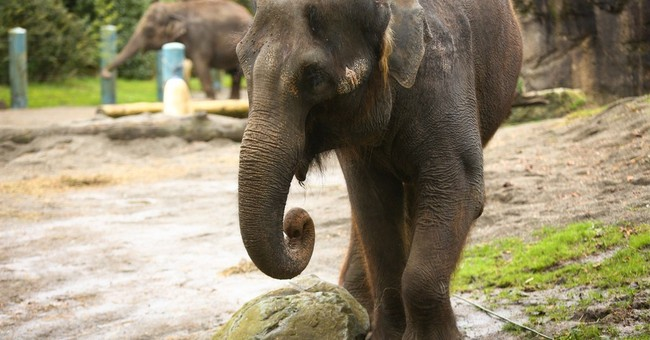 Judge won't block elephants' move from one zoo to another