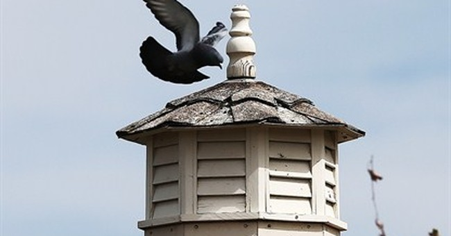Pigeon lover loses backyard loft, formerly home to 200 birds