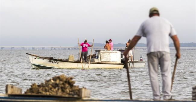 Correction: Florida Oyster Shortage story