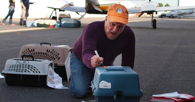 Volunteer pilots help doomed dogs land new chance at life