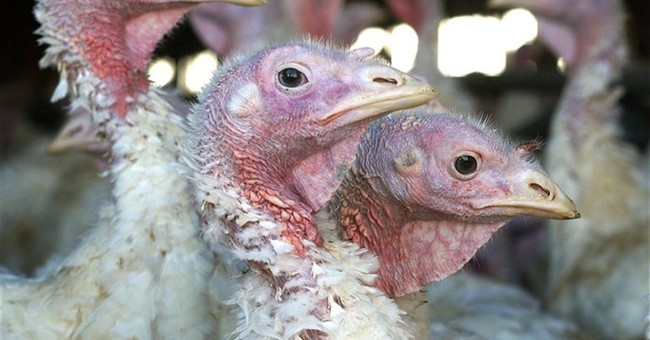 Bird flu outbreak spreads to 3 more Midwest turkey farms