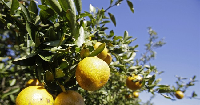 Endangering Our Citrus Industry
