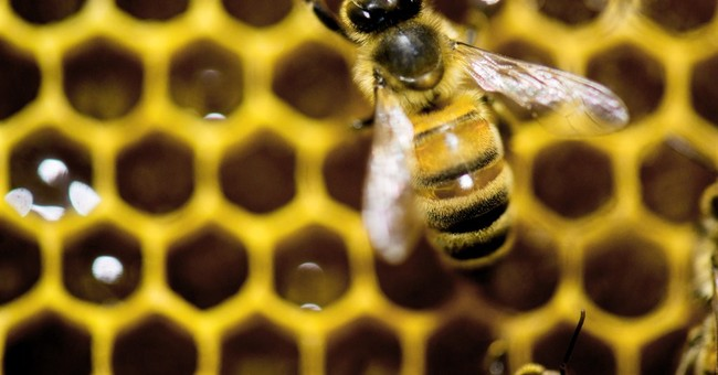 Bee Facts Change – Green Agendas Don't