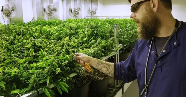 Marijuana, Killing California!